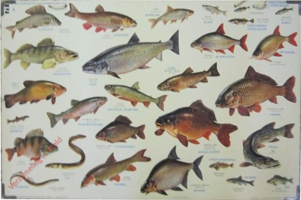 3 - Zoetwatervissen
